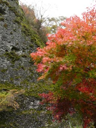 礫岩峰と紅葉 5