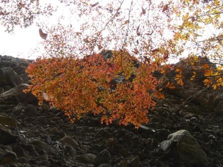 礫岩峰と紅葉 4