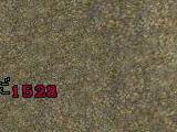 0807122.jpg