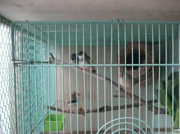 キンカ鳥2