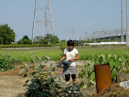 暑い中、畑で活動中