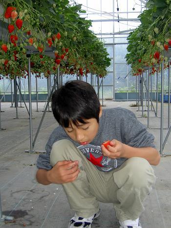 イチゴたくさ~ん!