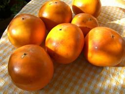 Sさんちの柿♪