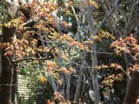 DSCF1189紅葉