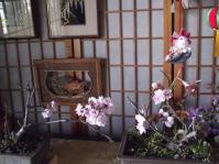 DSCF1285桜2