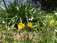 DSCF1299黄色い花