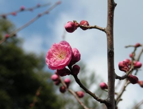 月読、京田辺 215