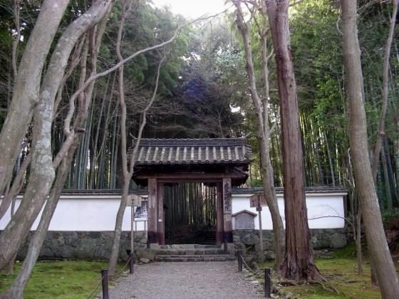 鈴虫、竹林寺 175