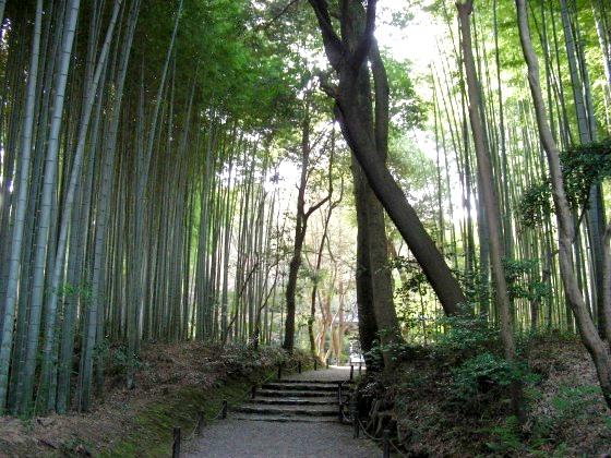 鈴虫、竹林寺 177
