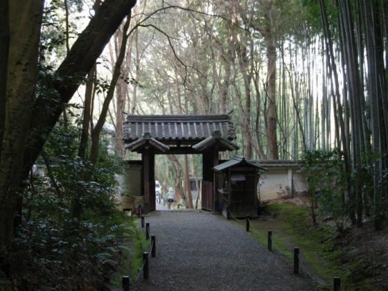 鈴虫、竹林寺 198
