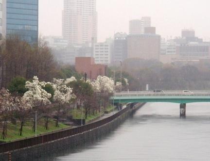 宇多野、学会、大阪城 239