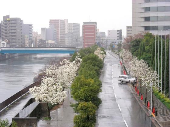 宇多野、学会、大阪城 242