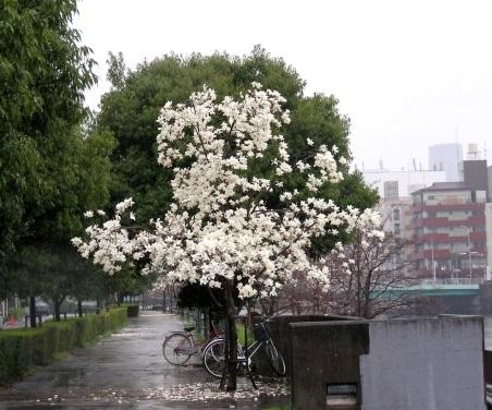 宇多野、学会、大阪城 244
