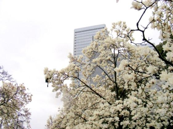 宇多野、学会、大阪城 256