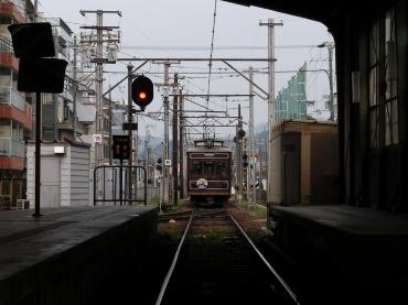 平野桜 004