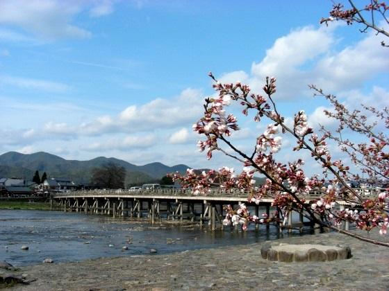嵐山桜2009 024
