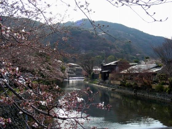 嵐山桜2009 003