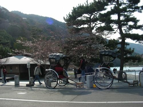 嵐山桜2009 018