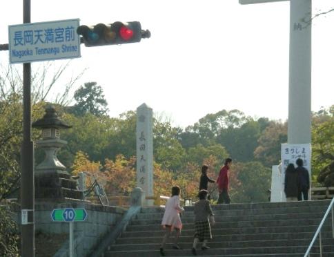 長岡桜 058