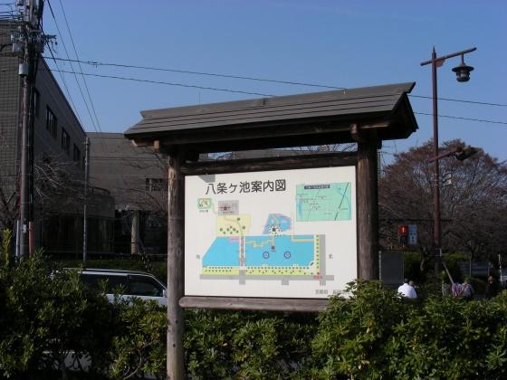 長岡桜 004