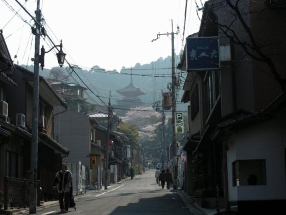 円山高台寺桜 015