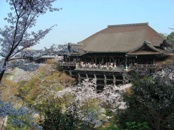 円山高台寺桜 046