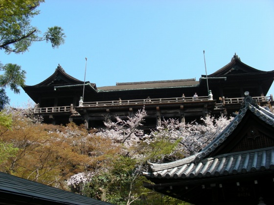 円山高台寺桜 051