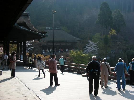 円山高台寺桜 038