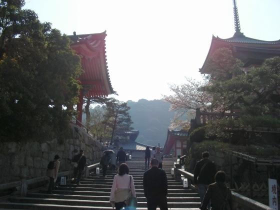 円山高台寺桜 019