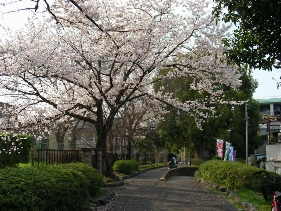 桜鳴滝、京大 069