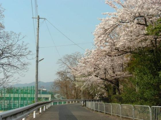 桜鳴滝、京大 083