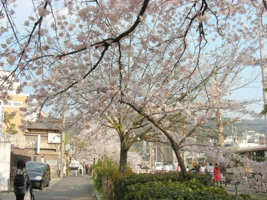 桜鳴滝、京大 059