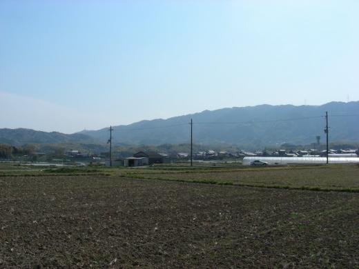 勝持寺桜 017