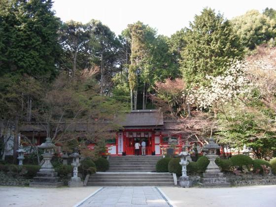勝持寺桜 101
