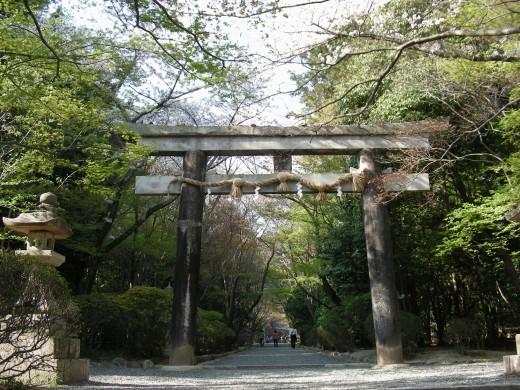 勝持寺桜 125