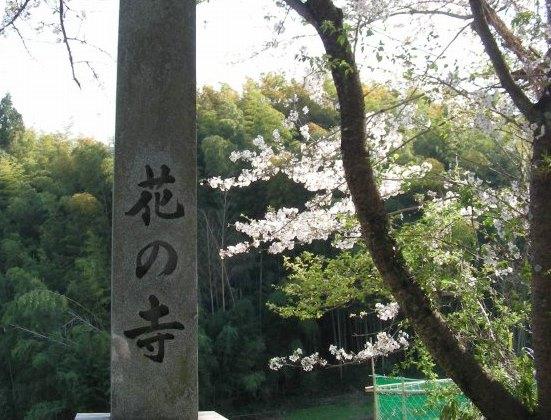 勝持寺桜 090
