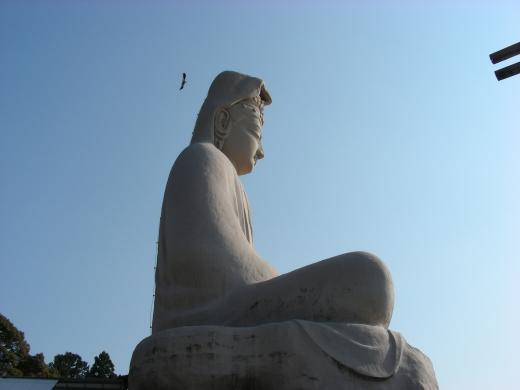 円山高台寺桜 163