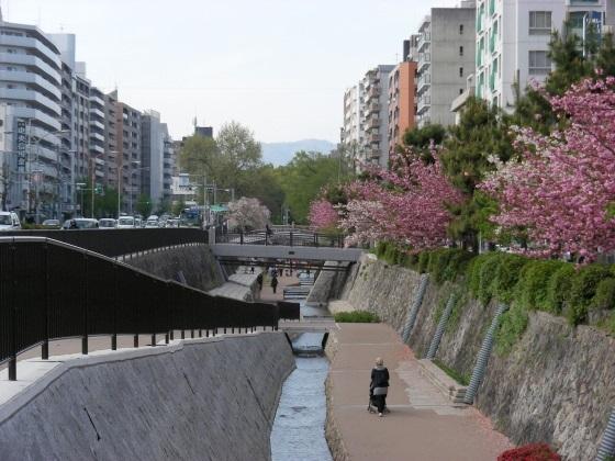 堀川桜 079