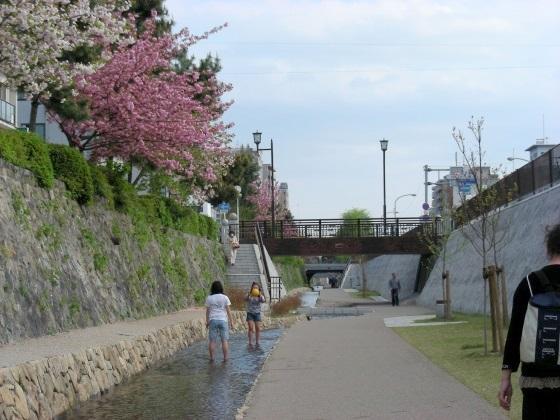 堀川桜 088