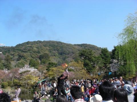 円山高台寺桜 077