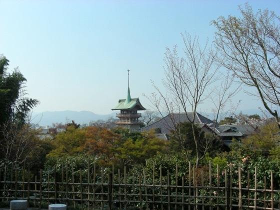 円山高台寺桜 103