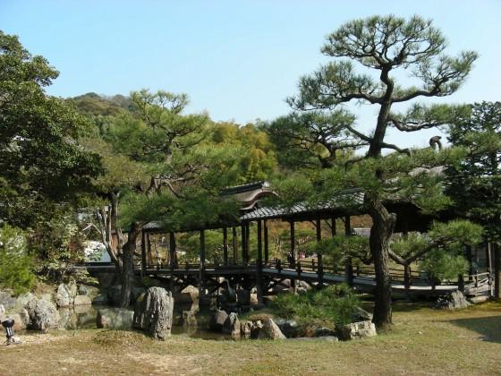 円山高台寺桜 106