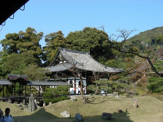 円山高台寺桜 110