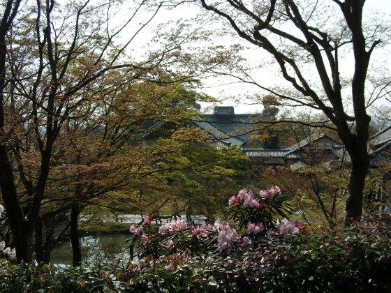 円山高台寺桜 128