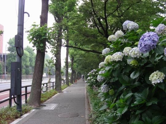東京6月 067