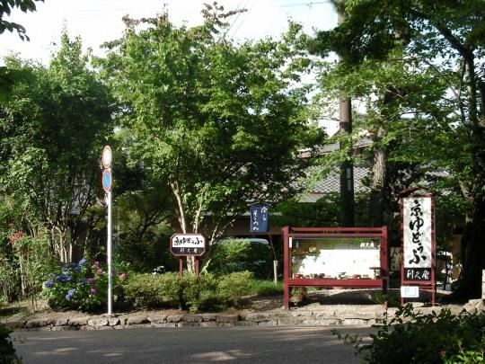 円山あじさい 017