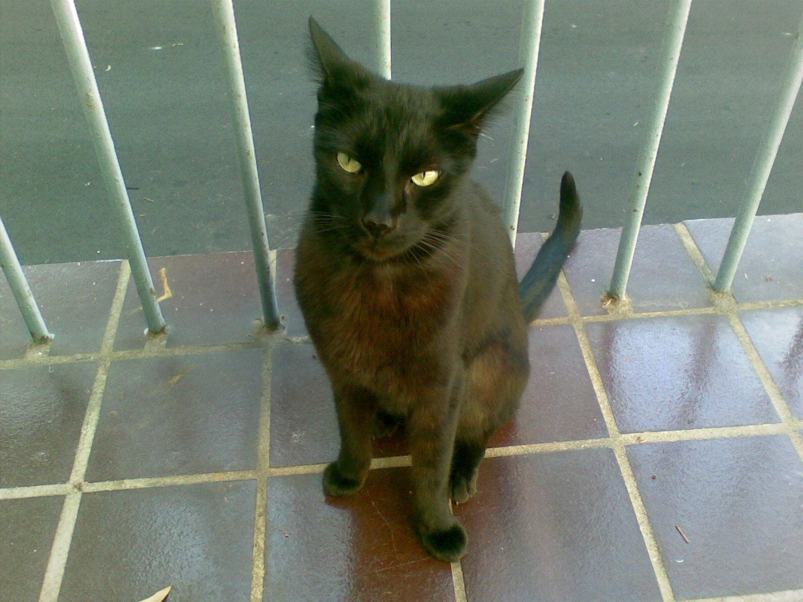 オーストラリア 猫 魔女の宅急便