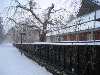 冬の樺細工伝承館 2