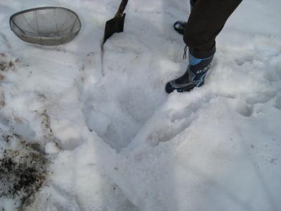 ひろっこ  雪を掘るところ  1