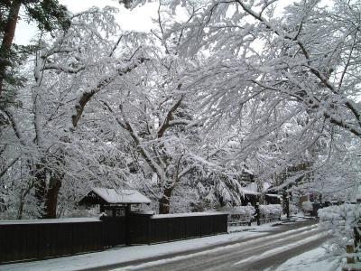 武家屋敷の風景2 3月28日